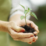 Photo: WOman's hands holding a seedling.